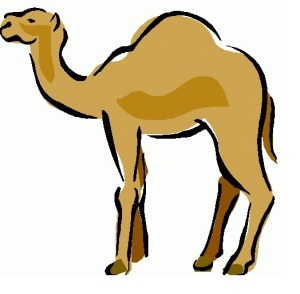 The Link Between Marketing Trends and... Camels
