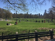 Gorgeous skyline encircling Central Park