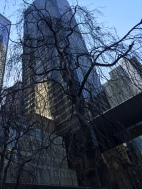 Contrast: Nature in the city, MoMA