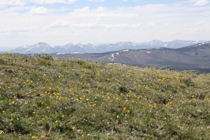 Mt Washburn06
