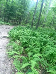 Ferns line the A.T.