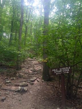 Trail Options